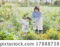 การทำสวนสำหรับพ่อแม่และเด็ก 17888738