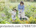 園藝 水生植物 女兒 17888739