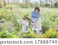 gardening, parenthood, parent and child 17888740