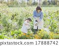園藝 水生植物 女兒 17888742
