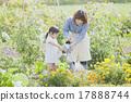 การทำสวนสำหรับพ่อแม่และเด็ก 17888744