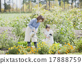 gardening, parenthood, parent and child 17888759
