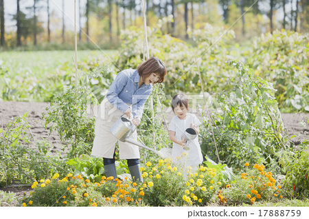 การทำสวนสำหรับพ่อแม่และเด็ก 17888759
