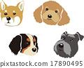 dog, dogs, Shiba 17890495