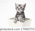 小貓 貓咪 貓 17890755