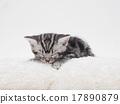 小猫 猫咪 猫 17890879