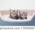 小貓 貓咪 貓 17890885