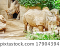 Rhino / rhinoceros grazing on nature. 17904394