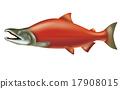 紅大麻哈魚 自然 三文魚 17908015
