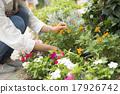 園藝 花園 院子 17926742