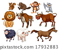 wildlife, animal, vector 17932883