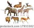 野生 野生生物 动物 17933302