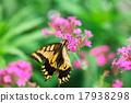 鳳蝶 蝴蝶 蟲子 17938298