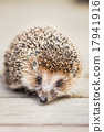 Small Funny Hedgehog On Wooden Floor 17941916