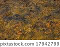 Closeup of brown seaweed at low tide 17942799