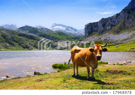 mountains landscape with lake and cow 17968978