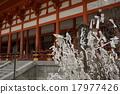 복권 매고 나무 일본의 풍경 17977426