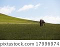 草原上的馬 17996974