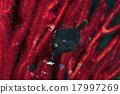 日本三叶草 山羊 河豚 17997269