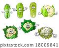 花椰菜 蔬菜 甘蓝 18009841