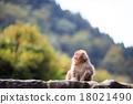 원숭이, 몽키, 일본 원숭이 18021490