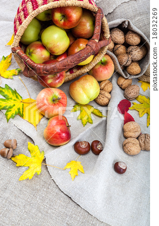 Stock Photo: Autumn theme. Apples in a basket and walnuts