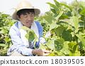 農民 農夫 農舍 18039505