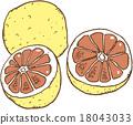 grapefruit, grapefruits, fruit 18043033