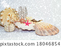 Seashells on white sparkling sandy beach 18046854