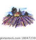 Watercolor landscape with blooming lavender  18047239