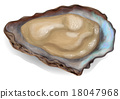 oyster 18047968
