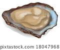 oyster, shell, shellfish 18047968