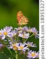 蝴蝶 花朵 花 18055327