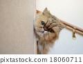 貓 貓咪 小貓 18060711