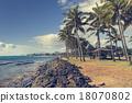 Coconut Palm tree on the sandy beach in Kapaa  18070802