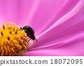 蟲子 漏洞 昆蟲 18072095