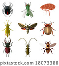 flat, insect, set 18073388