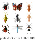 flat, vector, insect 18073389