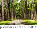 Walkway Lane Path With Green Trees in Pine park  18075014
