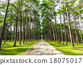Walkway Lane Path With Green Trees in Pine park 18075017