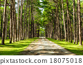 Walkway Lane Path With Green Trees in Pine park  18075018