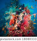 水生的 珊瑚 鱼 18080333