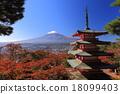 ภูเขาฟูจิ,ภูเขาไฟฟูจิ,ต้นเมเปิล 18099403
