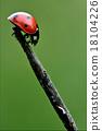 side of  wild red ladybug 18104226
