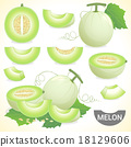 Set of cantaloupe honeydew honeymelon fruit vector 18129606