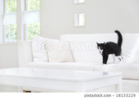 꼬리를 부풀린 고양이 18133229