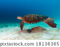turtle coming to you underwater 18136365