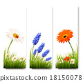 Three flower banners. Vector. 18156078