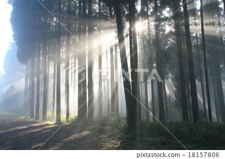 Stock Photo: Beam Of Light, japanese cedar forest, sun