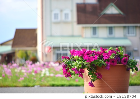 Potania potted plants and townscape 18158704